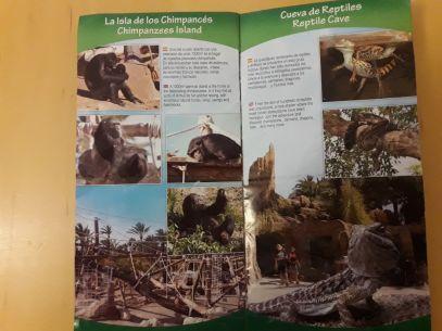 rio-safari-ile-des-chimpanzes